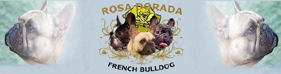 bulldog frances cria y seleccion